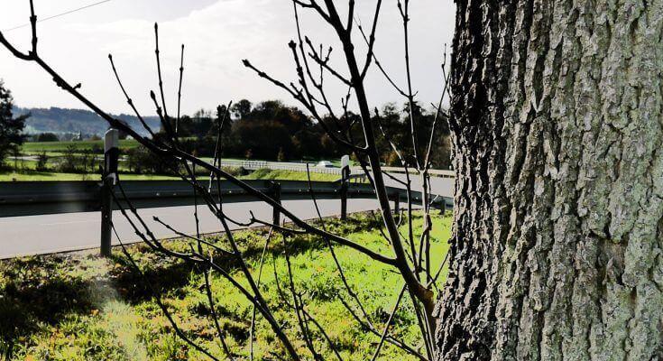 Schaddokumentation von Straßen, Bäumen und Schildern